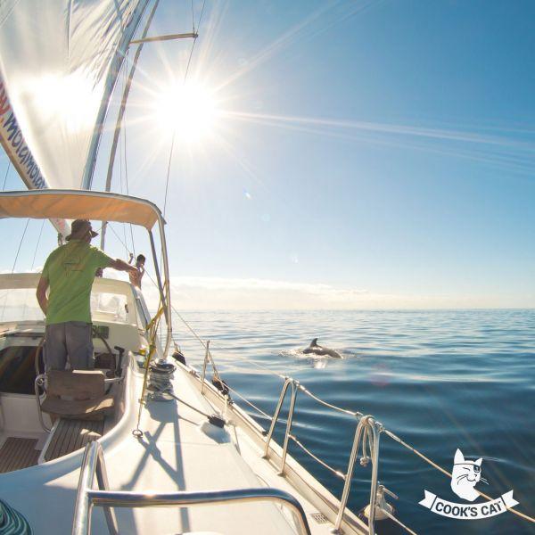 Segelausflug auf Teneriffa zu den Delfinen von Los Gigantes