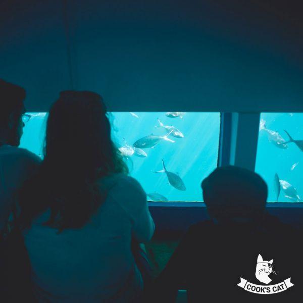 Unterwasser-Beobachtung beim Glasbodenboot-Bootsausflug auf Teneriffa